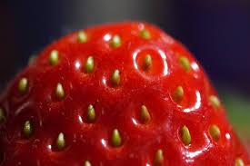 イチゴの種