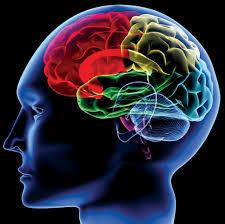 臭いを感じる大脳